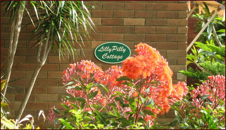 Lillypilly - Tourism Brisbane