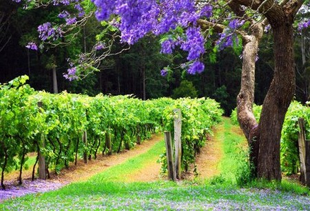 Bago Vineyards - Tourism Brisbane