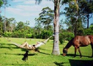 Neds Bed Horse O Tel - Tourism Brisbane