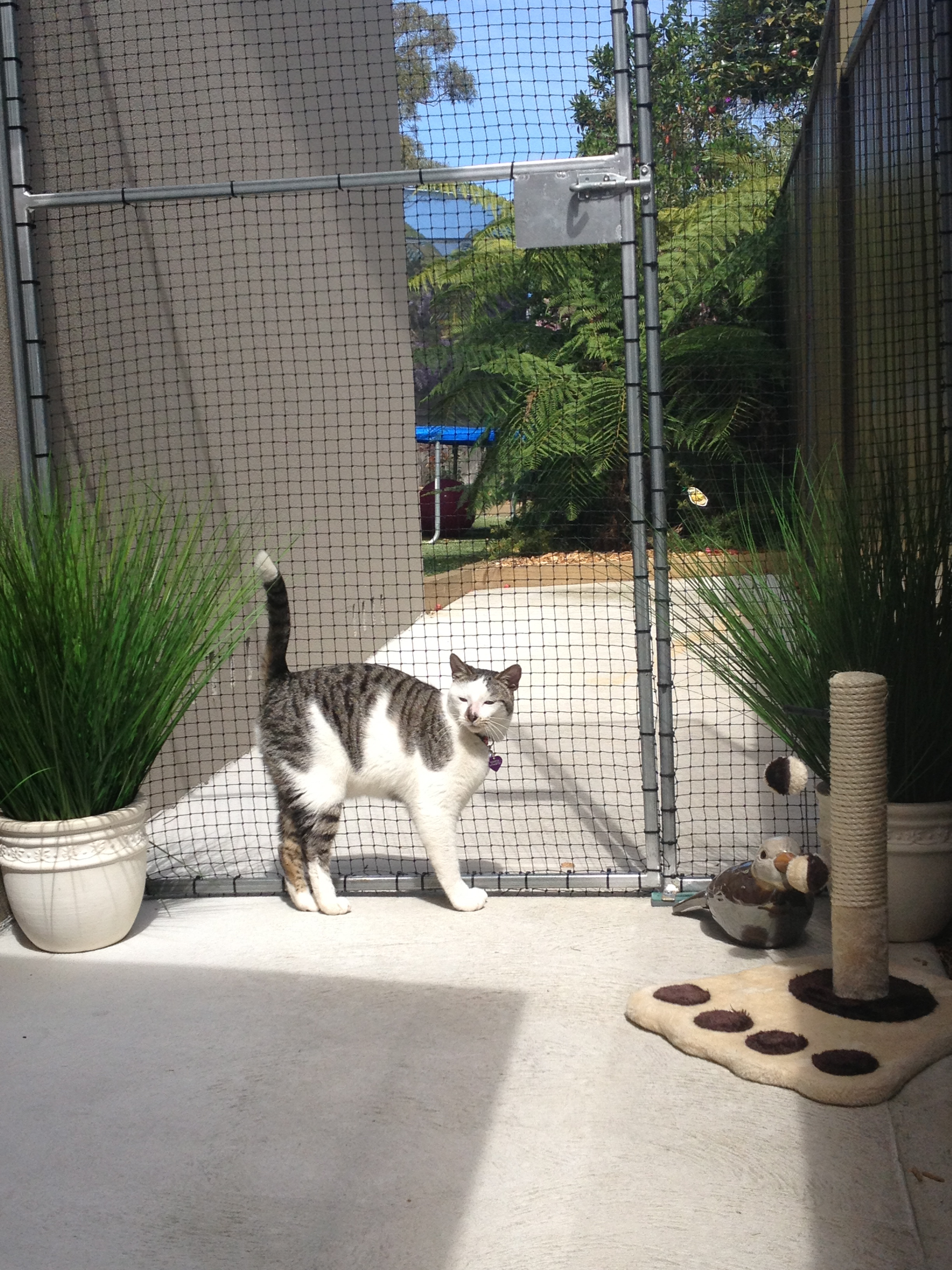 Caringbah Cat Hotel - Tourism Brisbane