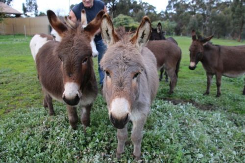 Donkey Tales Farm Cottages - Tourism Brisbane