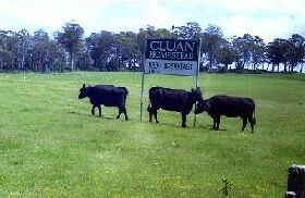 Cluan Homestead - Tourism Brisbane