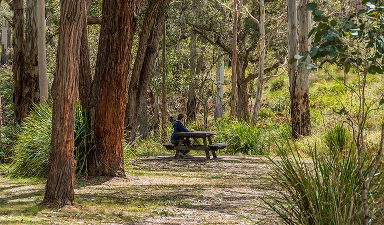 Koreelah Creek campground - Tourism Brisbane