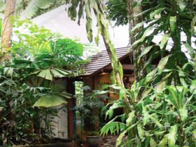 Heritage Lodge and Spa - In the Daintree - Tourism Brisbane