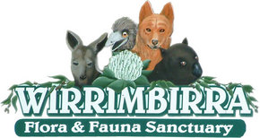 Wirrimbirra Sanctuary - Tourism Brisbane