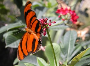 Butterfly Farm - Tourism Brisbane