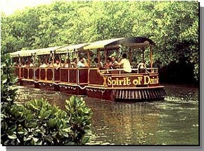 Daintree Rainforest River Trains - Tourism Brisbane