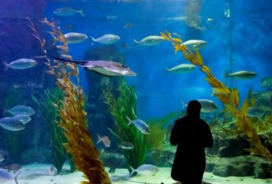 Melbourne Aquarium - Tourism Brisbane
