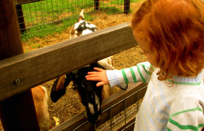 Collingwood Children's Farm - Tourism Brisbane