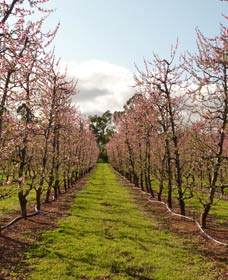 Raeburn Orchards - Tourism Brisbane