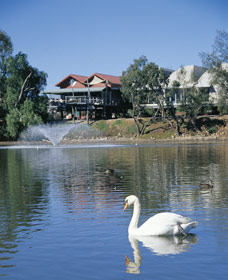 White Swans - Tourism Brisbane