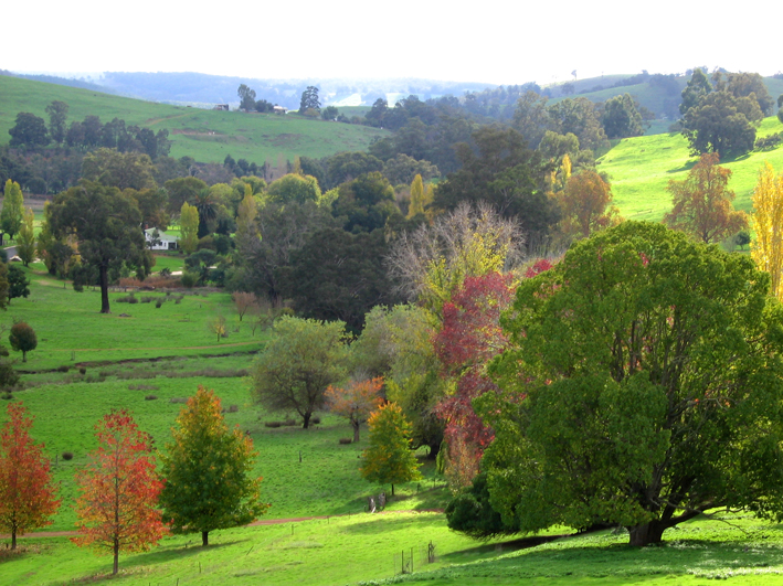 Golden Valley Tree Park - Tourism Brisbane