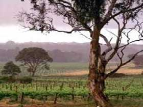 Yangarra Estate Vineyard - Tourism Brisbane