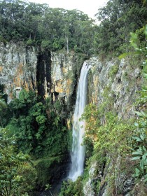 Gondwana Rainforests of Australia - Tourism Brisbane