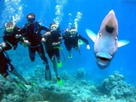 Jew Shoal Dive Site - Tourism Brisbane