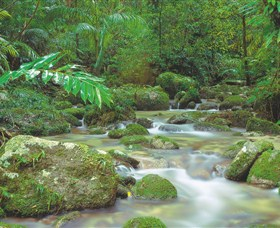 Mossman Gorge Daintree National Park - Tourism Brisbane