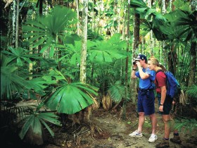 Mount Sorrow Ridge Trail Daintree National Park - Tourism Brisbane