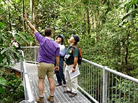 Daintree Discovery Centre - Tourism Brisbane