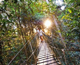 Tree Top Walkway - Tourism Brisbane