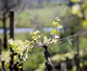 Elan Vineyard and Winery - Tourism Brisbane