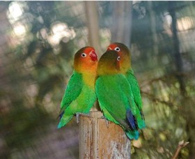 Ballarat Bird World - Tourism Brisbane
