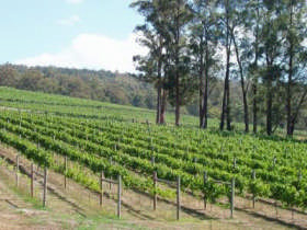 Piedmont Vineyard - Tourism Brisbane