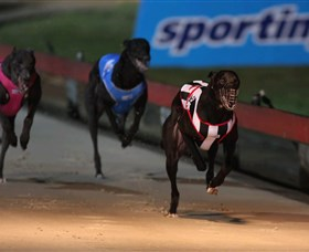 Dapto Dogs - Tourism Brisbane