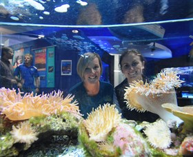 Solitary Islands Aquarium - Tourism Brisbane