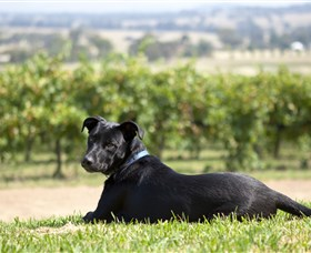 Moothi Estate Vineyard and Cellar Door - Tourism Brisbane