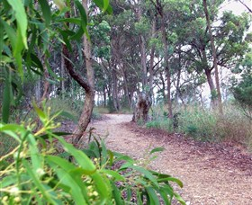 Mount Mutton Walking Trail - Tourism Brisbane