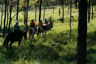Hunter Valley Horse Riding and Adventures - Tourism Brisbane