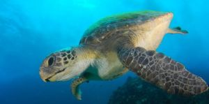 Byron Bay Dive Centre - Tourism Brisbane