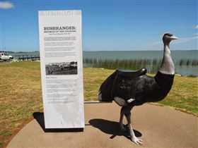 Birdman of the Coorong - Tourism Brisbane