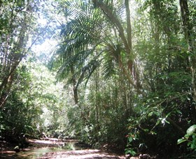 Mount Lewis National Park - Tourism Brisbane