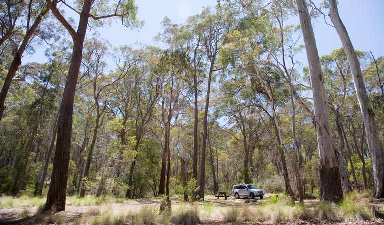 Coolah Tops National Park - Tourism Brisbane