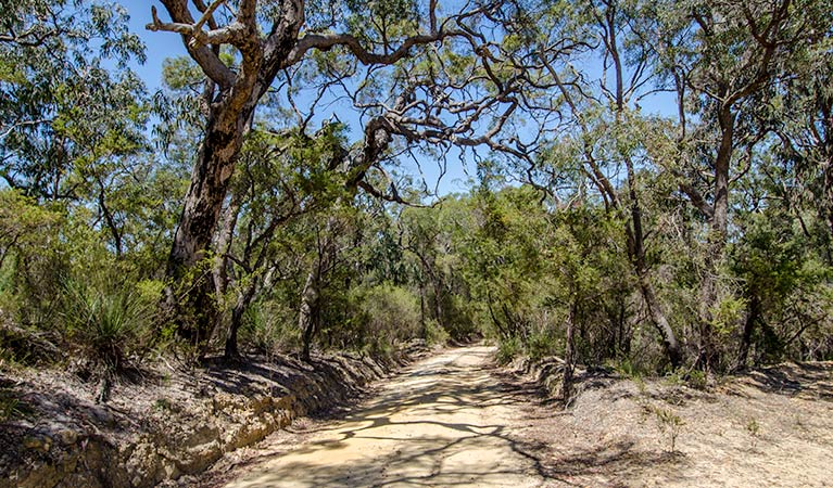Howes trail - Tourism Brisbane