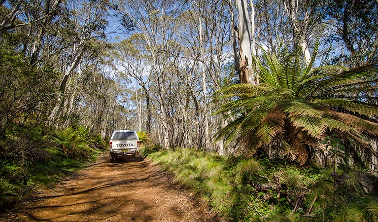 Barrington trail - Tourism Brisbane