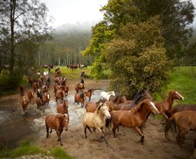 Glenworth Valley Horse Riding - Tourism Brisbane