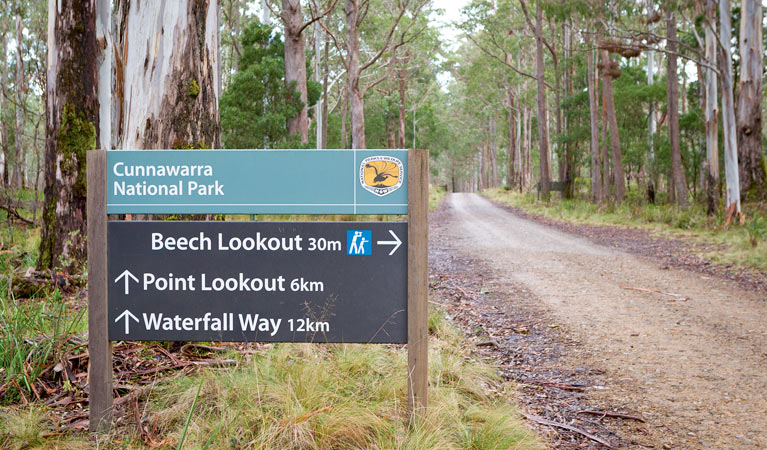 Beech lookout - Tourism Brisbane