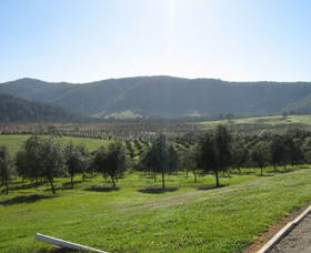 Hastings Valley Olives - Tourism Brisbane