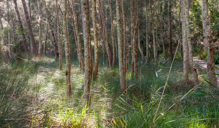 Anabranch loop track - Tourism Brisbane