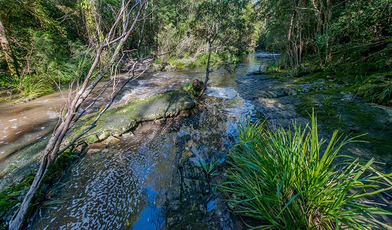 Dawson River walking track - Tourism Brisbane