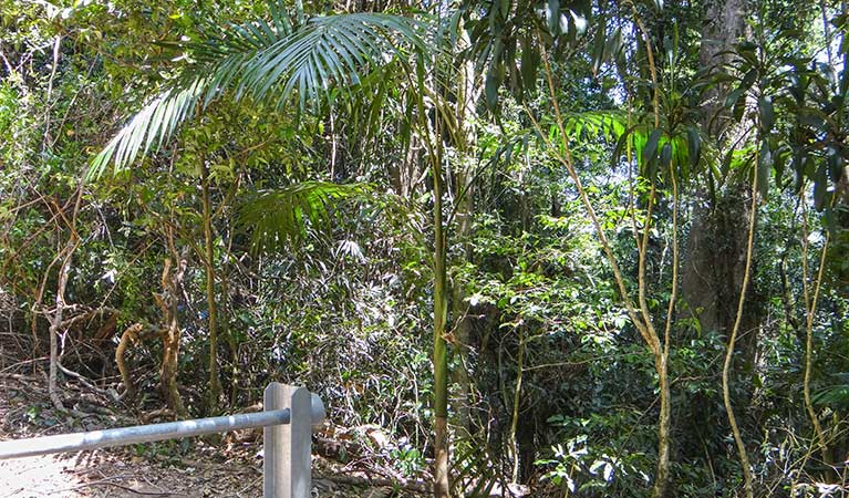 Goorgana walking track - Tourism Brisbane