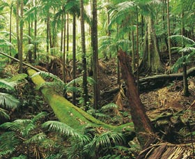 Wollumbin-Mount Warning National Park - Tourism Brisbane