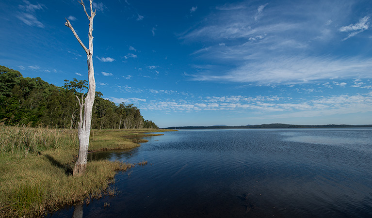 Lake Innes Nature Reserve - Tourism Brisbane