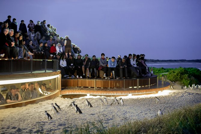 1 Day Private Phillip Island Tour VIP Charter up to 9 People - Tourism Brisbane