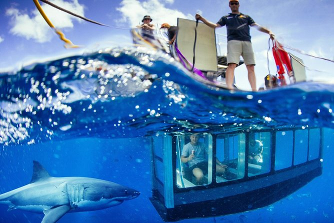 White Shark Tour with Optional Cage Dive from Port Lincoln - Tourism Brisbane