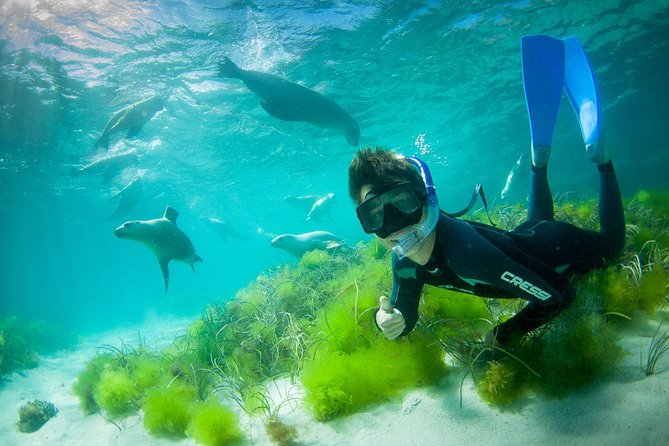 Half-Day Sea Lion Snorkeling Tour from Port Lincoln - Tourism Brisbane