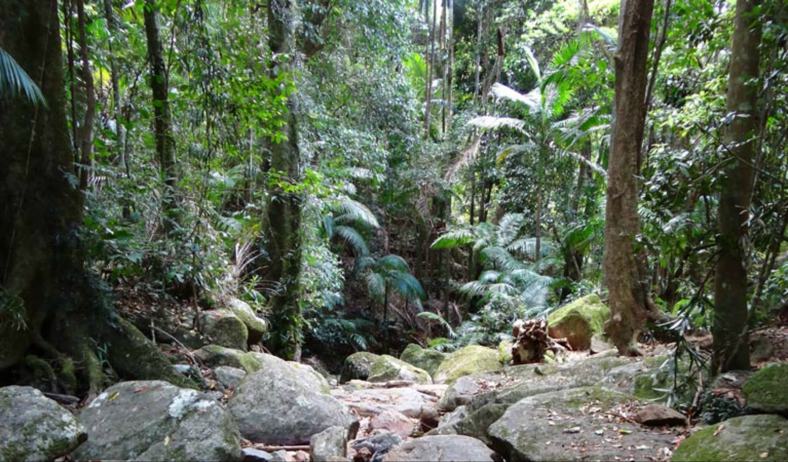 Lyrebird track - Tourism Brisbane