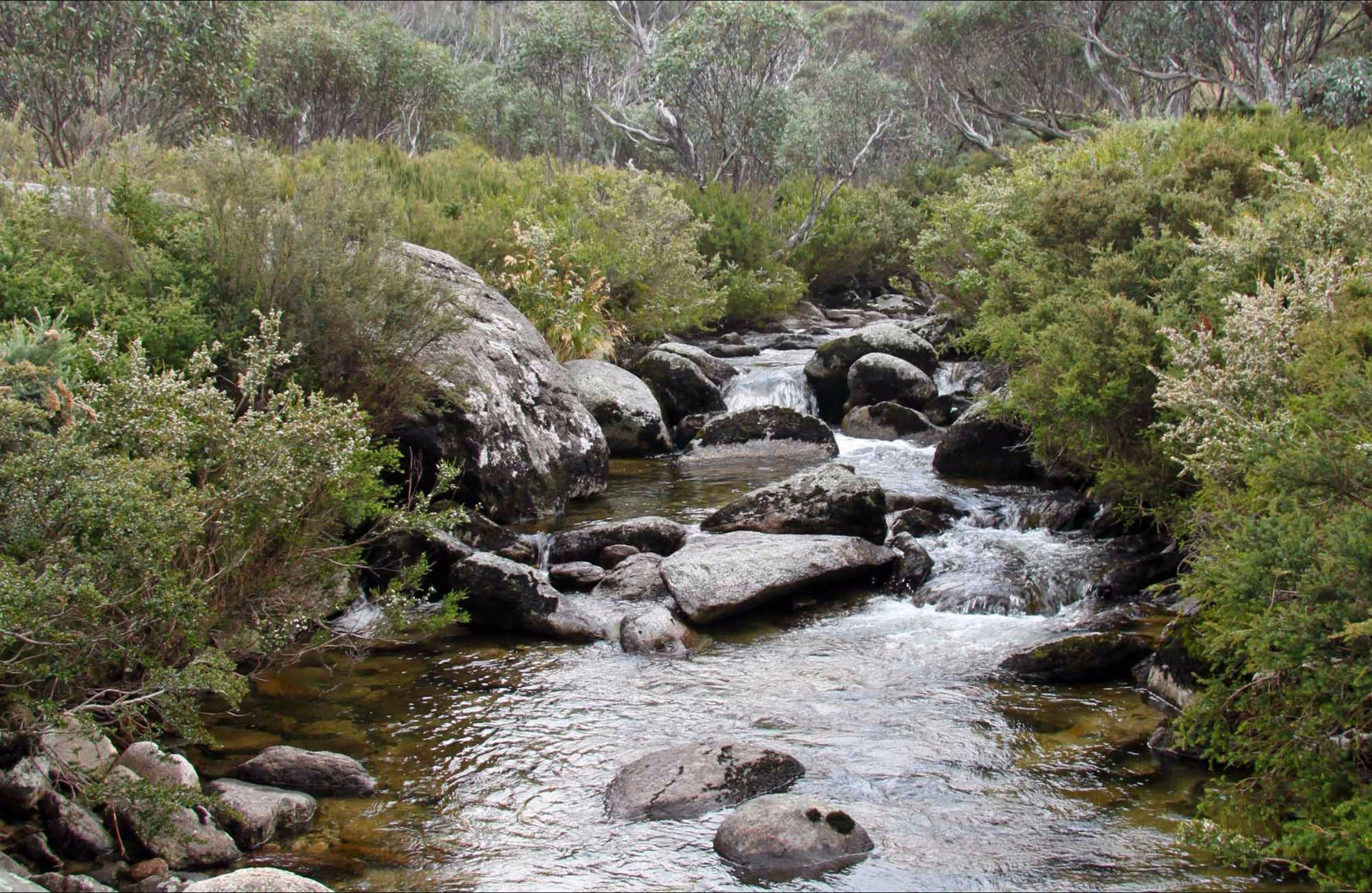 Thredbo River Track - Tourism Brisbane
